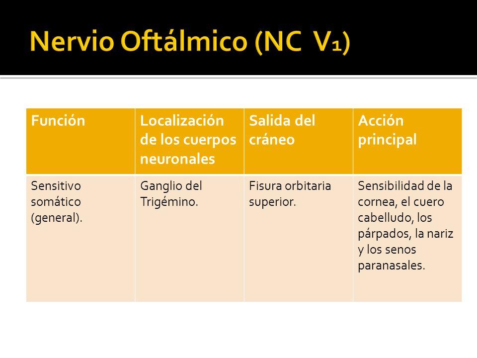 Nervio Oftálmico (NC V1)