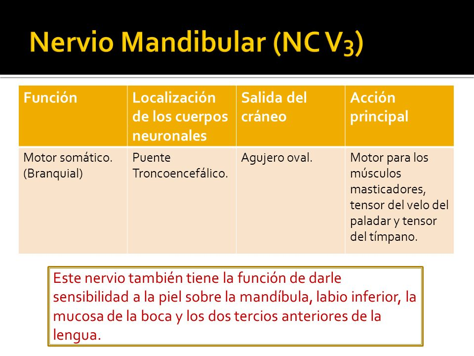 Nervio Mandibular (NC V3)