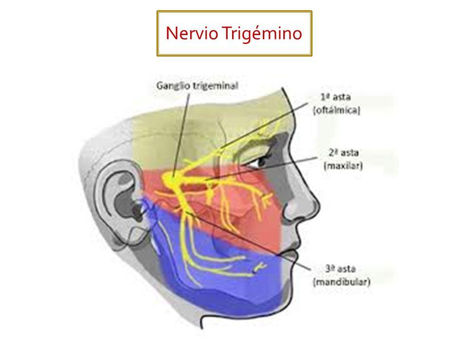 Nervio Trigémino