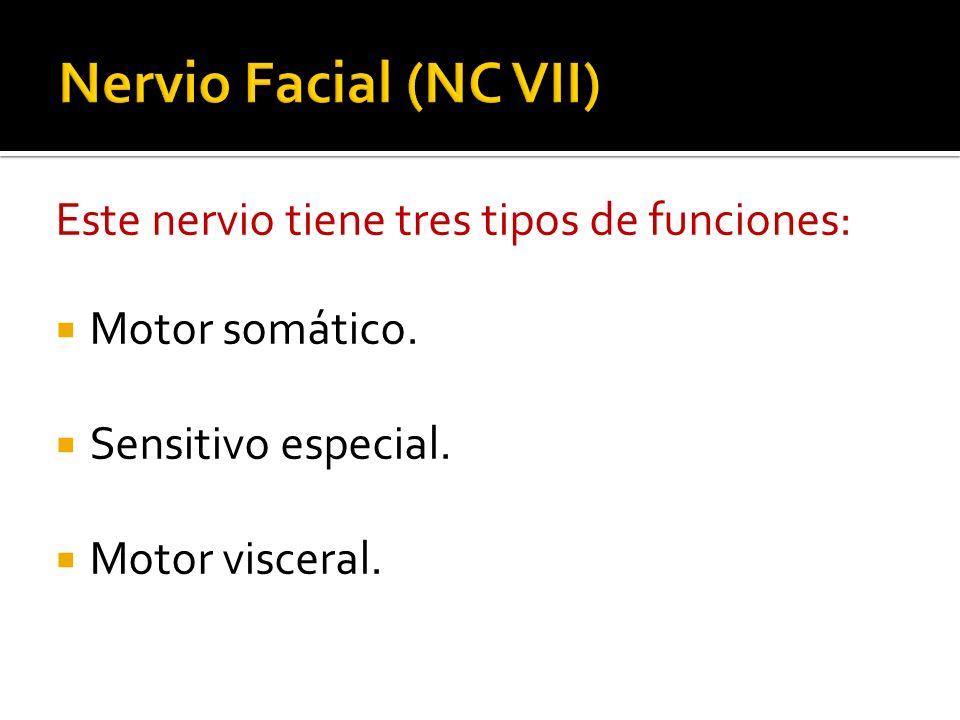 Nervio Facial (NC VII) Este nervio tiene tres tipos de funciones:
