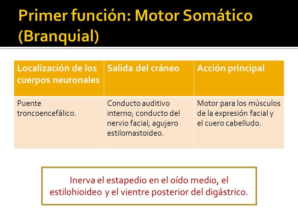 Primer función: Motor Somático (Branquial)