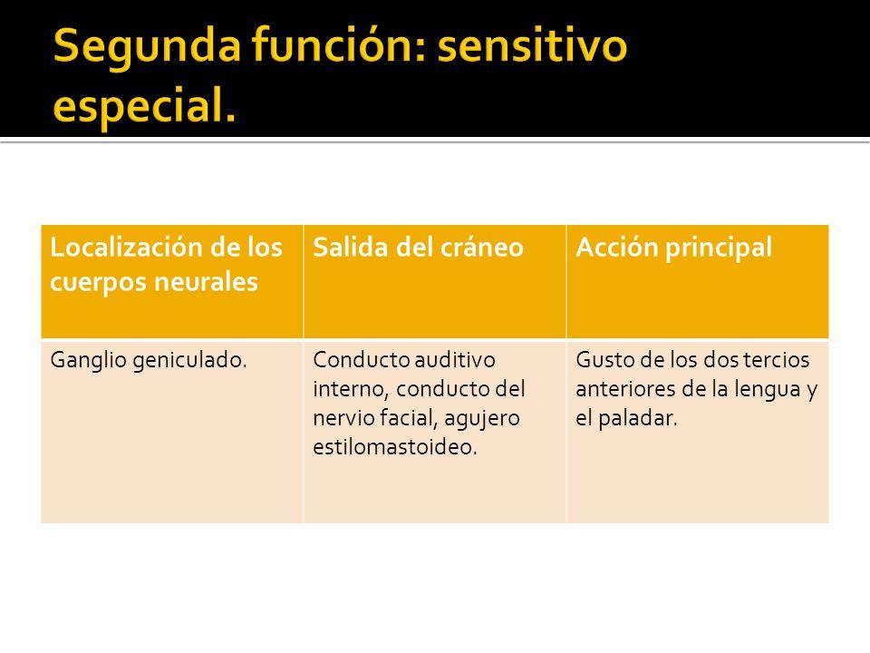 Segunda función: sensitivo especial.