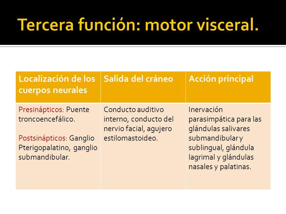 Tercera función: motor visceral.