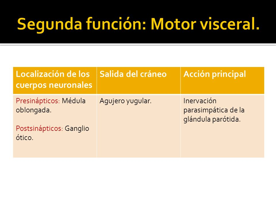 Segunda función: Motor visceral.