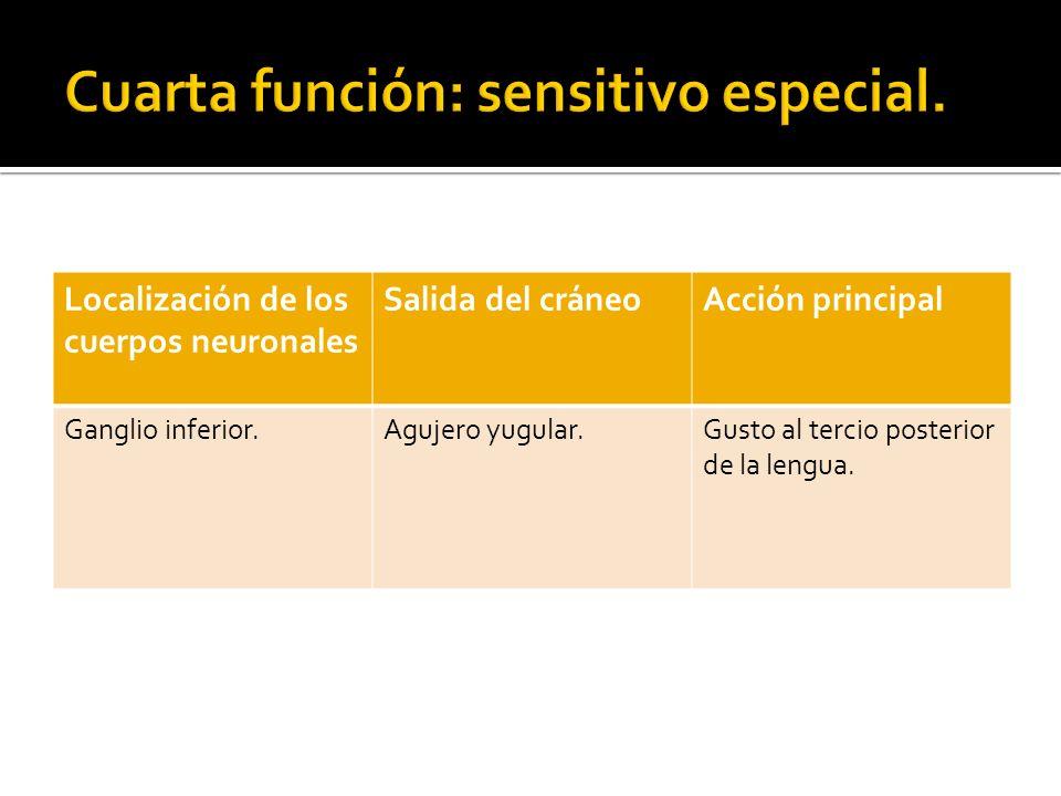 Cuarta función: sensitivo especial.