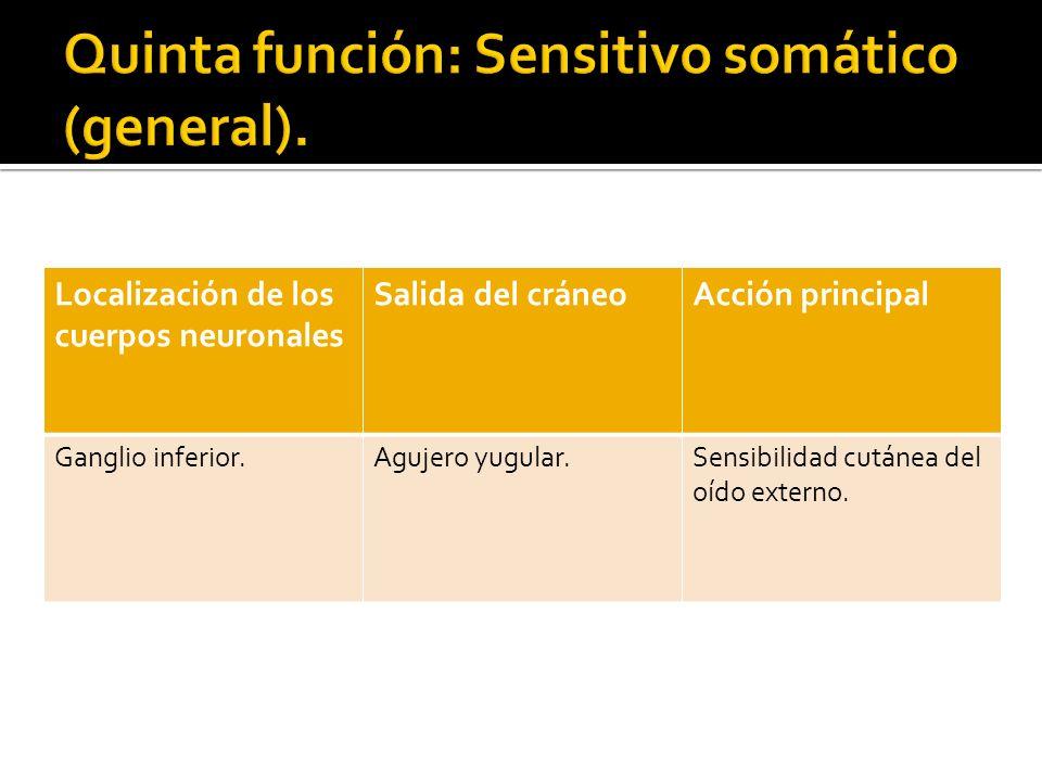 Quinta función: Sensitivo somático (general).