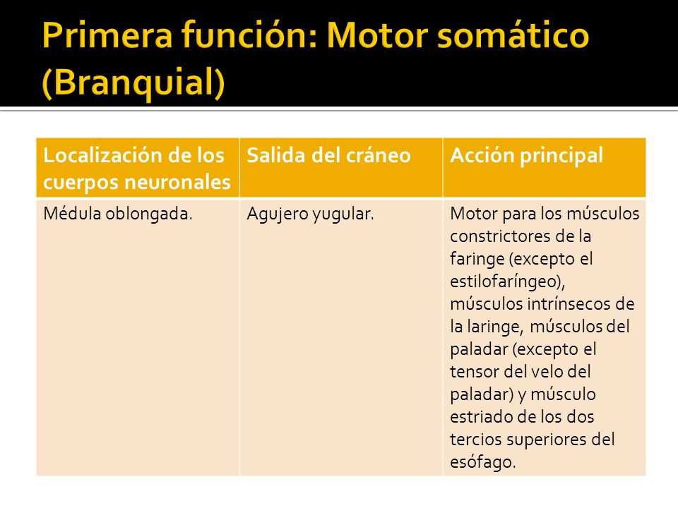 Primera función: Motor somático (Branquial)