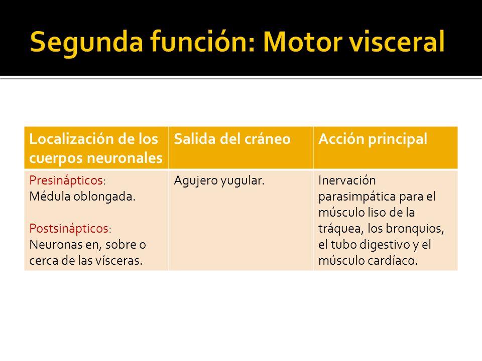 Segunda función: Motor visceral