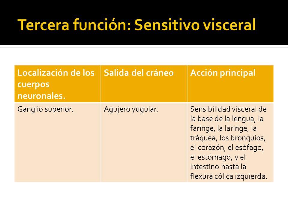 Tercera función: Sensitivo visceral