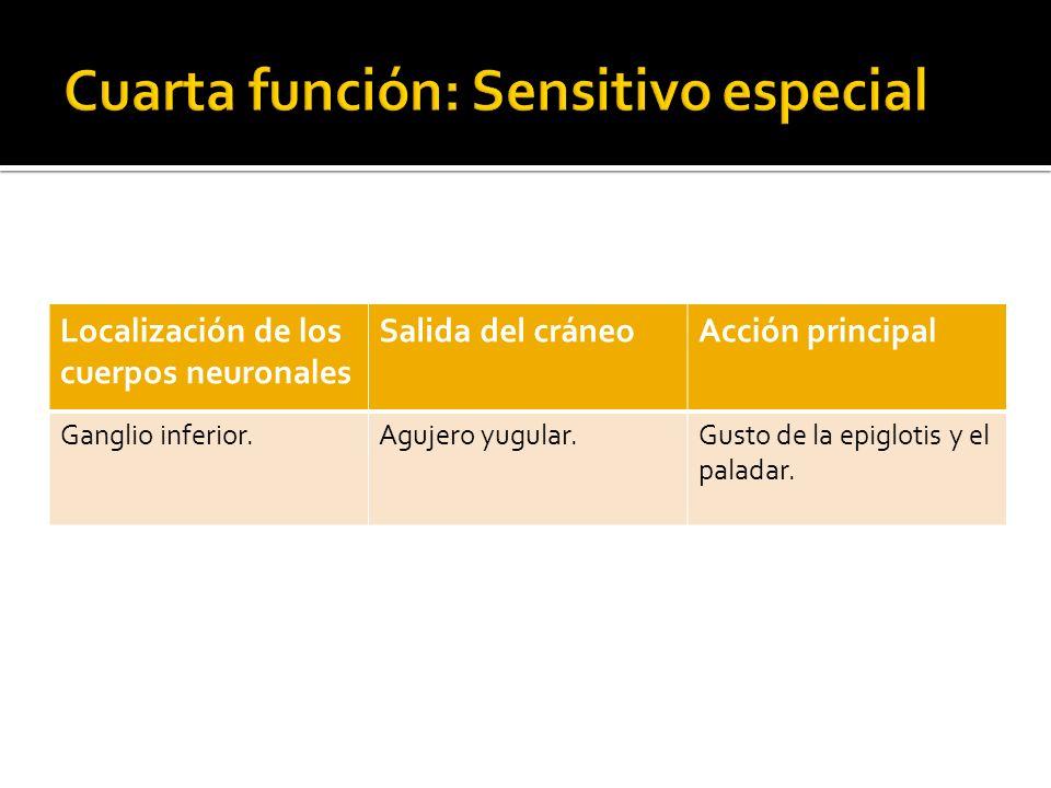 Cuarta función: Sensitivo especial