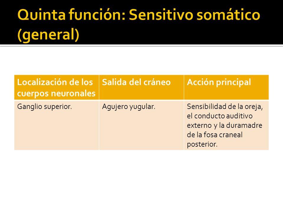 Quinta función: Sensitivo somático (general)