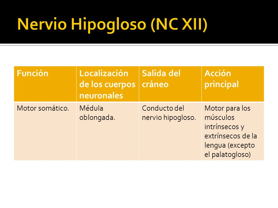 Nervio Hipogloso (NC XII)