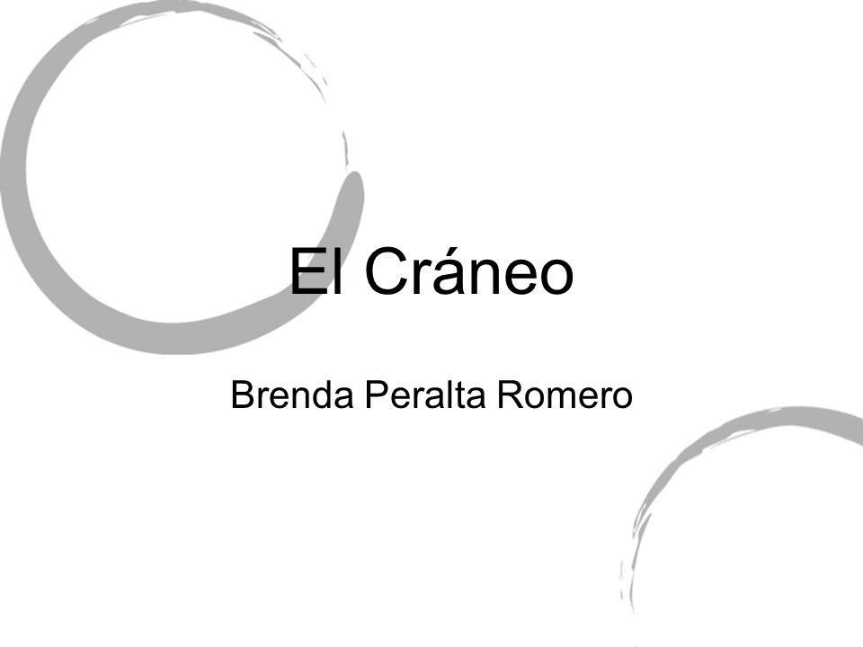 El Cráneo Brenda Peralta Romero