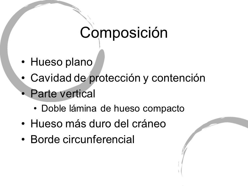 Composición Hueso plano Cavidad de protección y contención