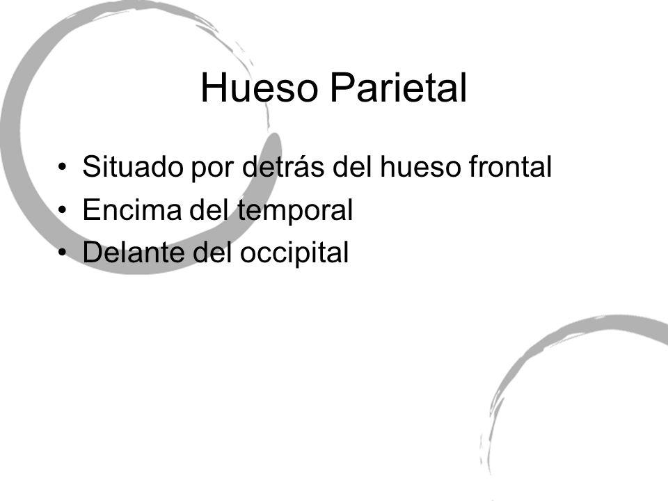 Hueso Parietal Situado por detrás del hueso frontal