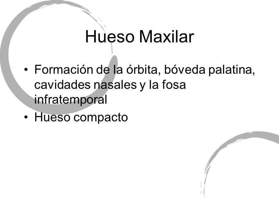 Hueso Maxilar Formación de la órbita, bóveda palatina, cavidades nasales y la fosa infratemporal.
