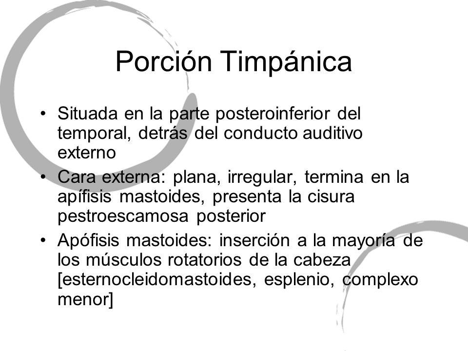 Porción Timpánica Situada en la parte posteroinferior del temporal, detrás del conducto auditivo externo.
