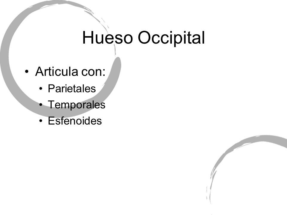 Hueso Occipital Articula con: Parietales Temporales Esfenoides