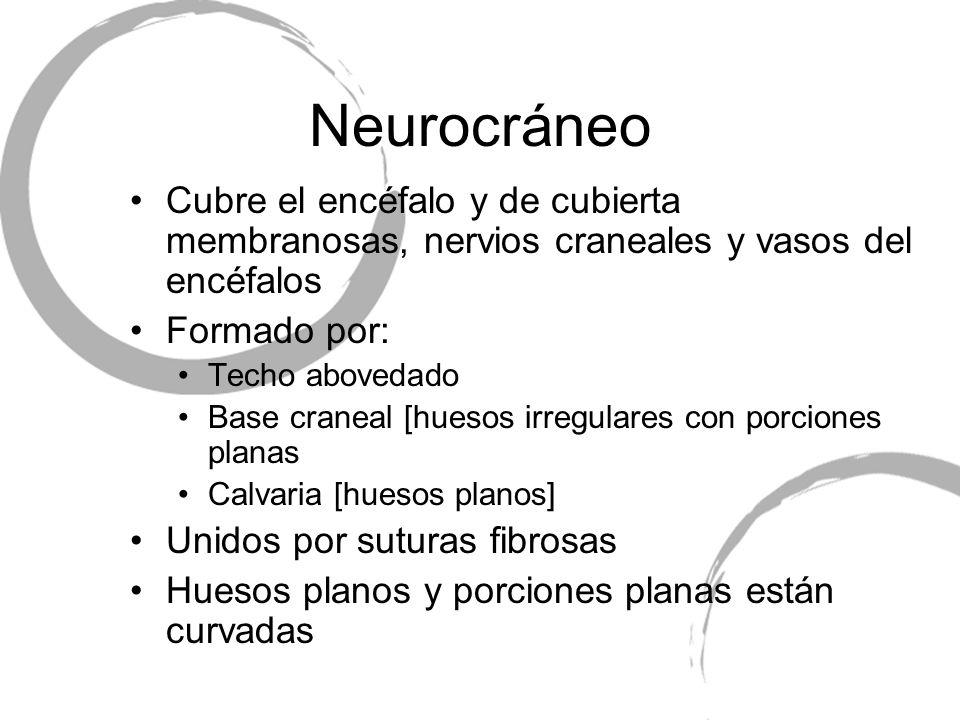 Neurocráneo Cubre el encéfalo y de cubierta membranosas, nervios craneales y vasos del encéfalos. Formado por: