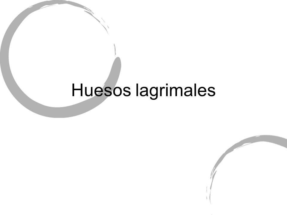 Huesos lagrimales