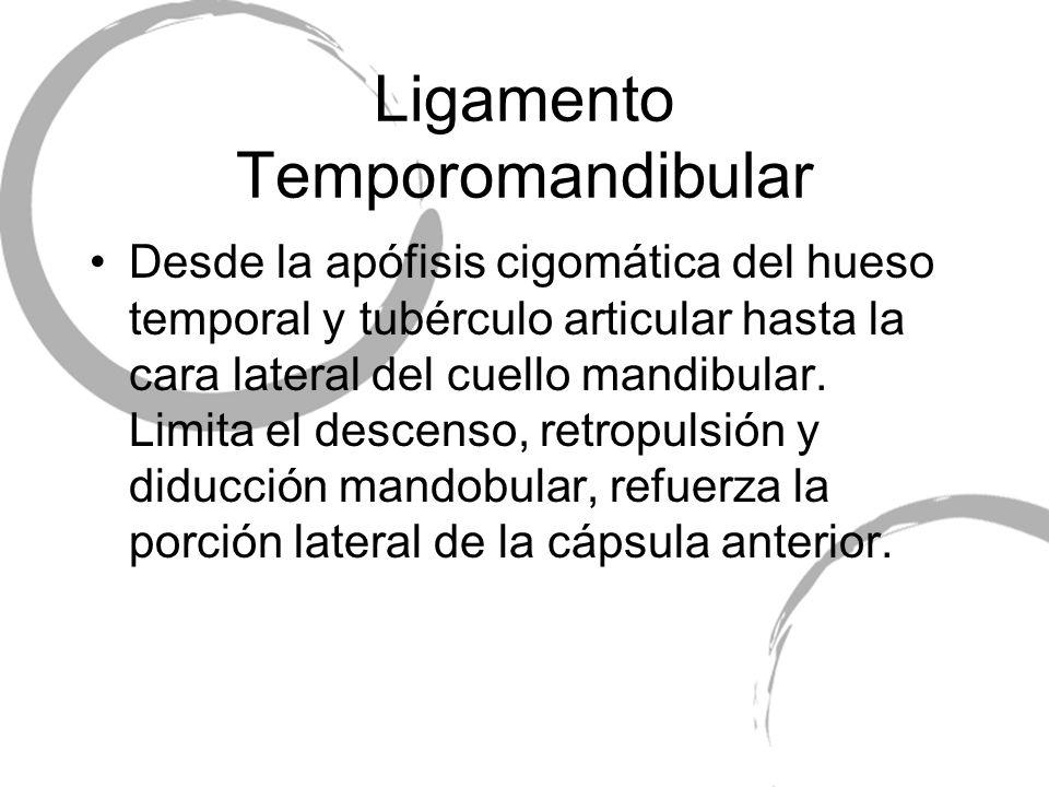 Ligamento Temporomandibular