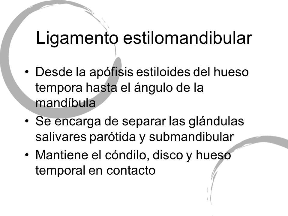 Ligamento estilomandibular