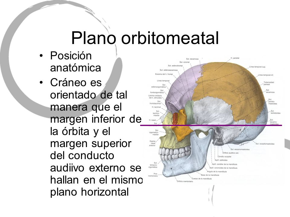 Plano orbitomeatal Posición anatómica