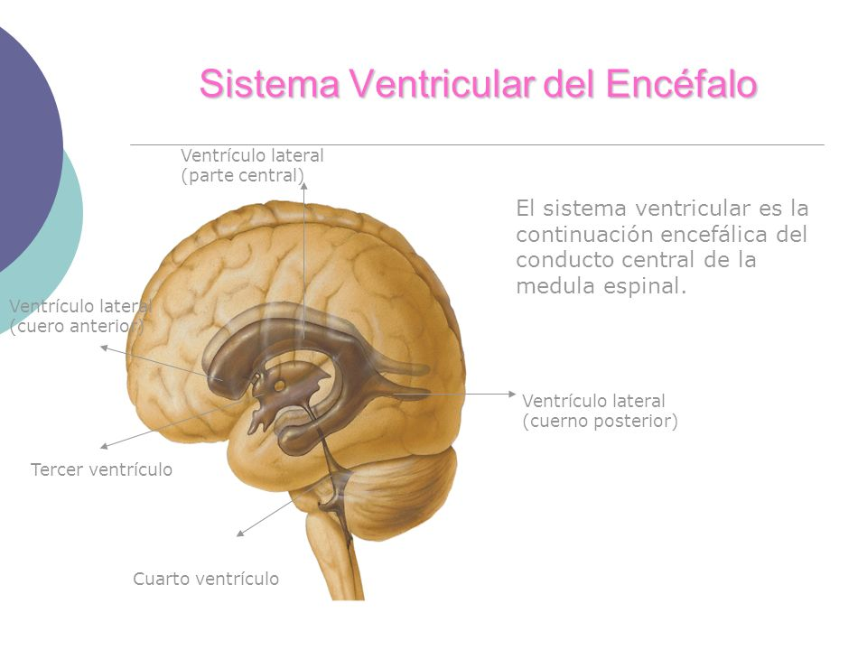 Sistema Ventricular del Encéfalo