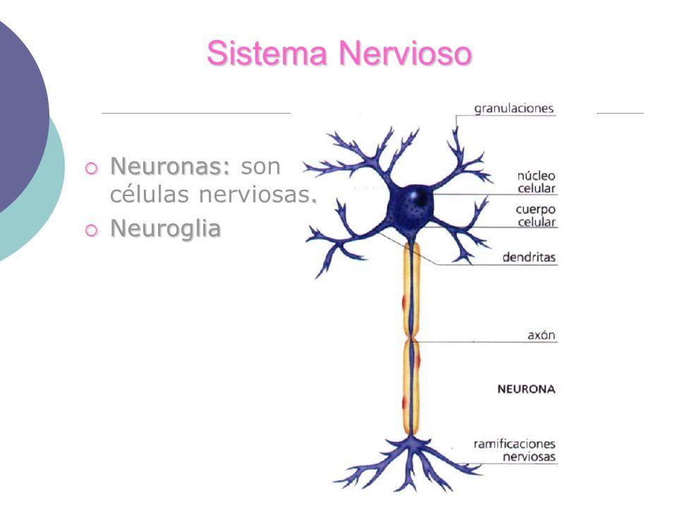 Sistema Nervioso Neuronas: son células nerviosas. Neuroglia