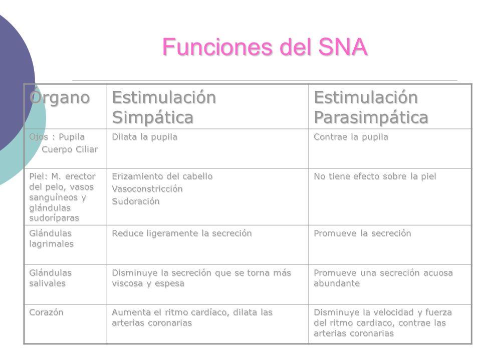 Funciones del SNA Órgano Estimulación Simpática