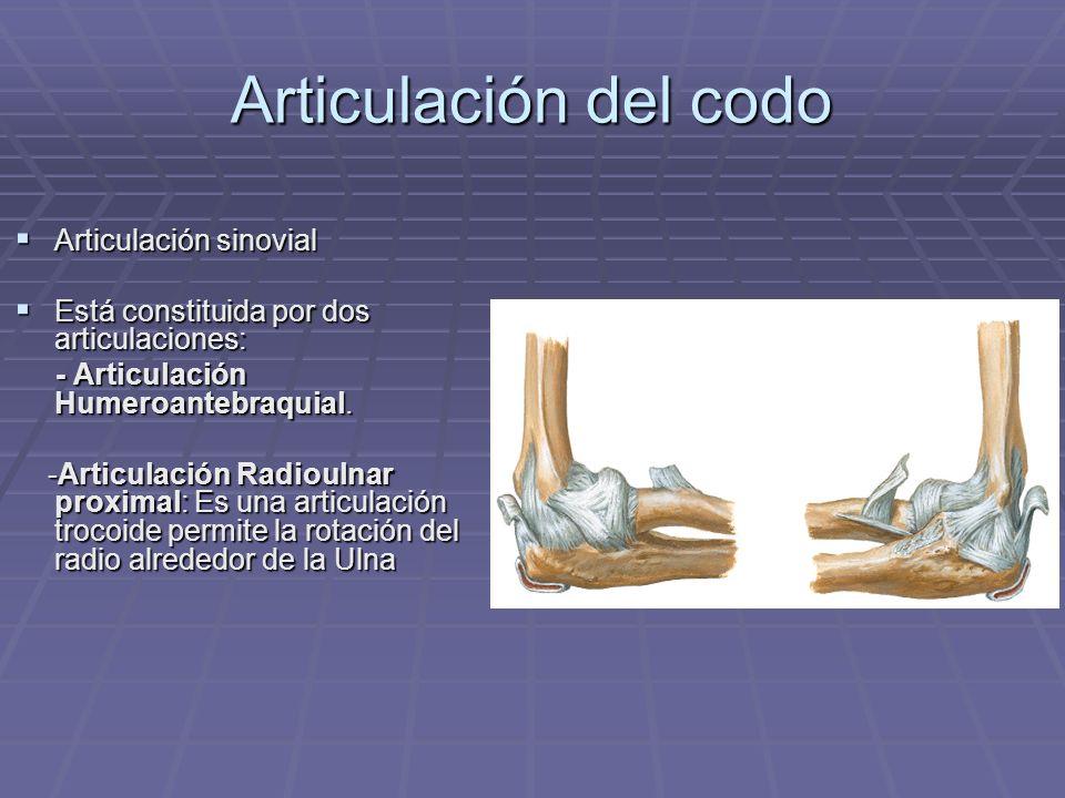 Articulación del codo Articulación sinovial