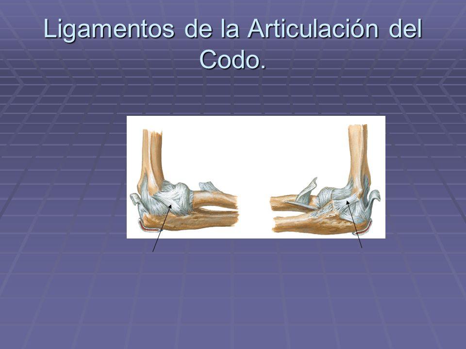 Ligamentos de la Articulación del Codo.