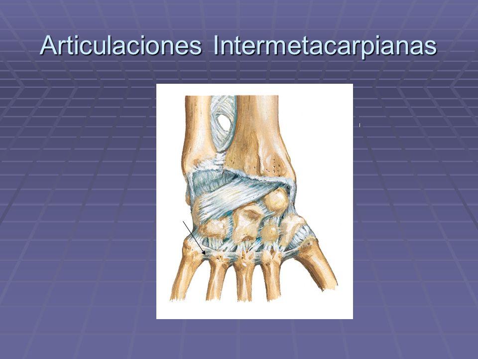Articulaciones Intermetacarpianas