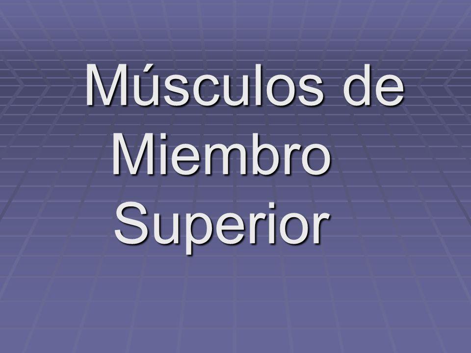Músculos de Miembro Superior