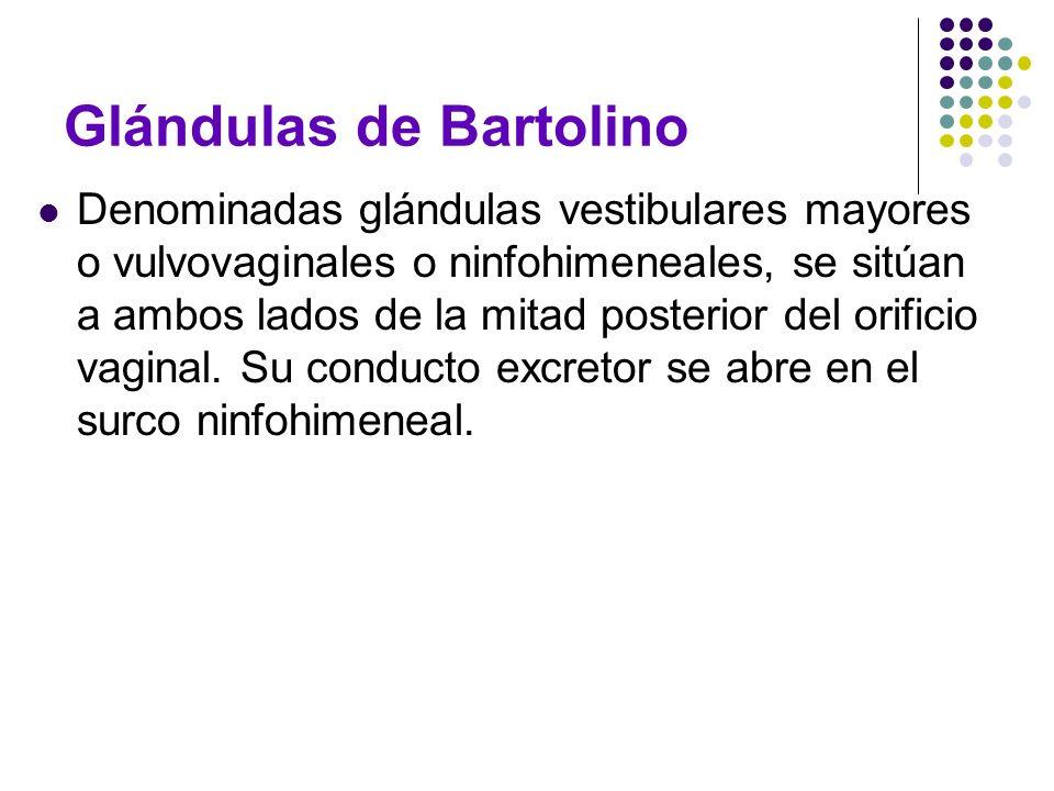 Glándulas de Bartolino