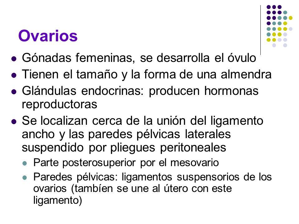 Ovarios Gónadas femeninas, se desarrolla el óvulo