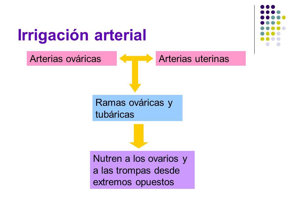 Irrigación arterial Arterias ováricas Arterias uterinas