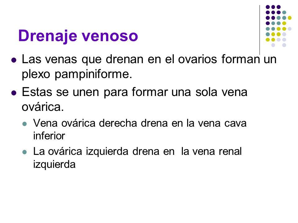 Drenaje venoso Las venas que drenan en el ovarios forman un plexo pampiniforme. Estas se unen para formar una sola vena ovárica.