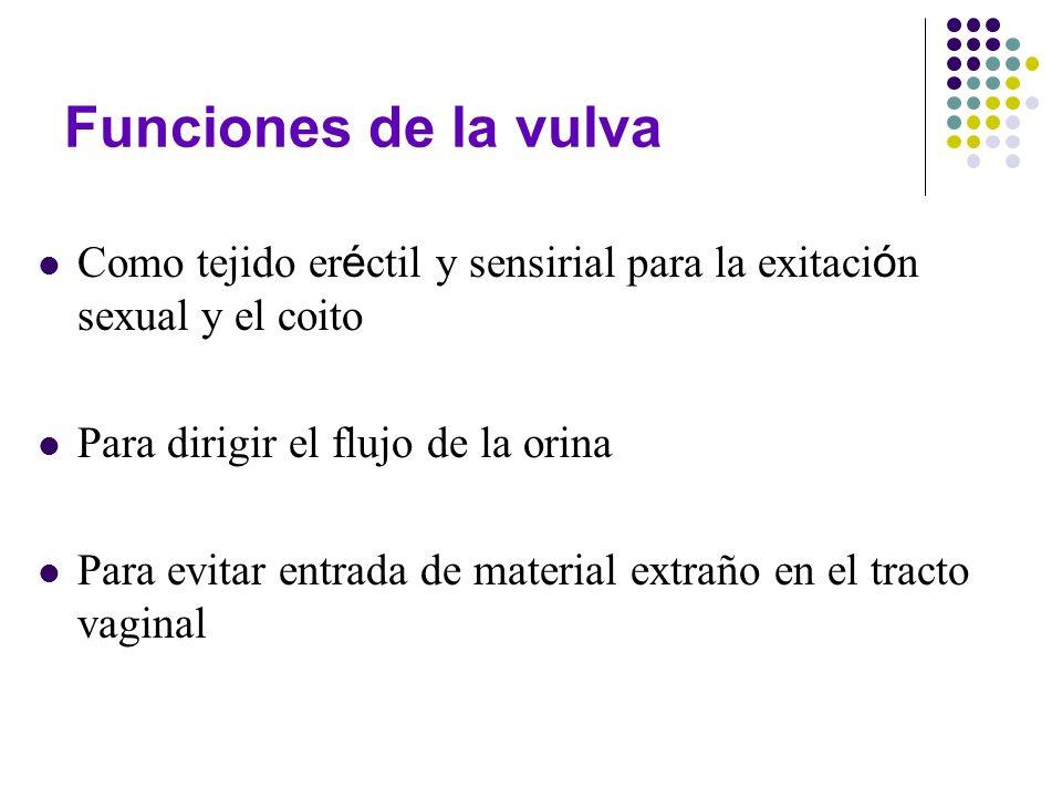 Funciones de la vulva Como tejido eréctil y sensirial para la exitación sexual y el coito. Para dirigir el flujo de la orina.
