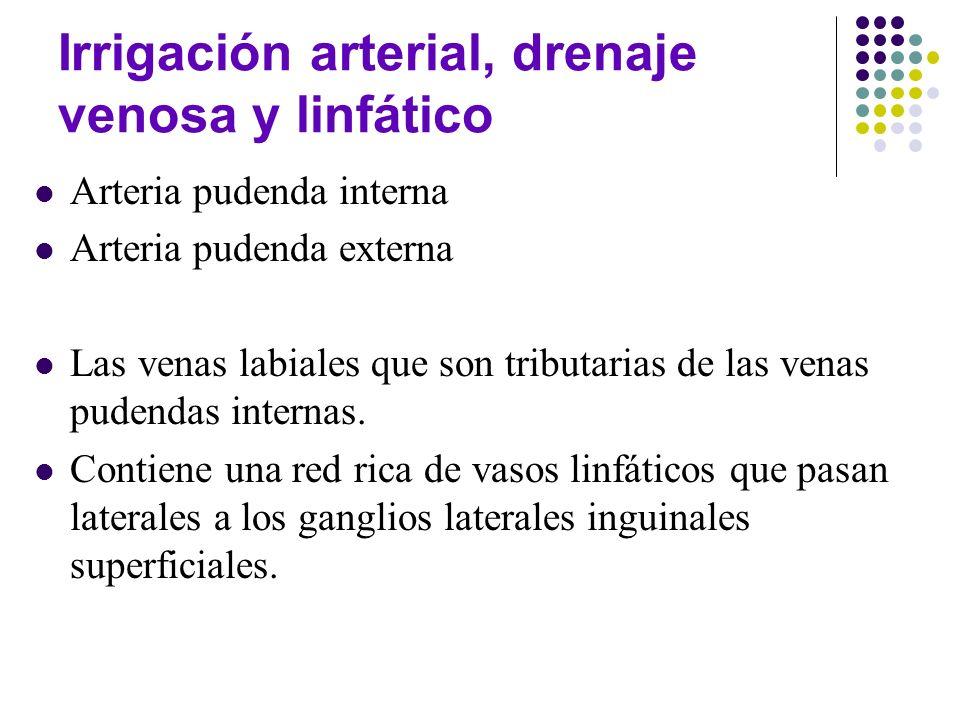 Irrigación arterial, drenaje venosa y linfático
