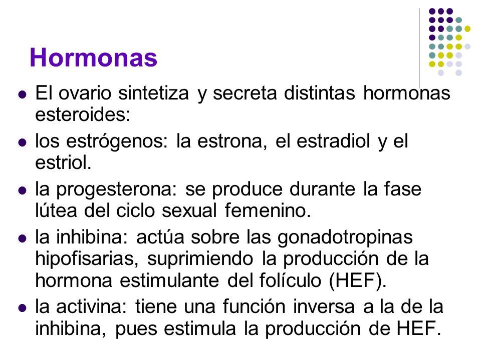 Hormonas El ovario sintetiza y secreta distintas hormonas esteroides: