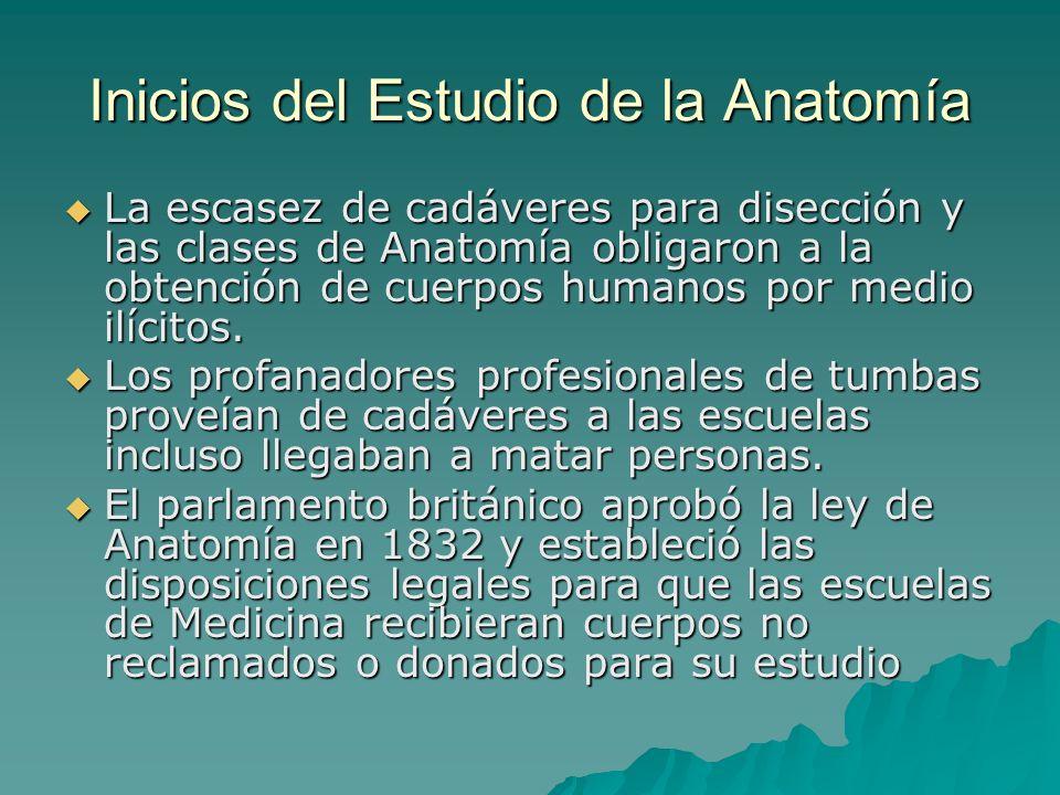Inicios del Estudio de la Anatomía
