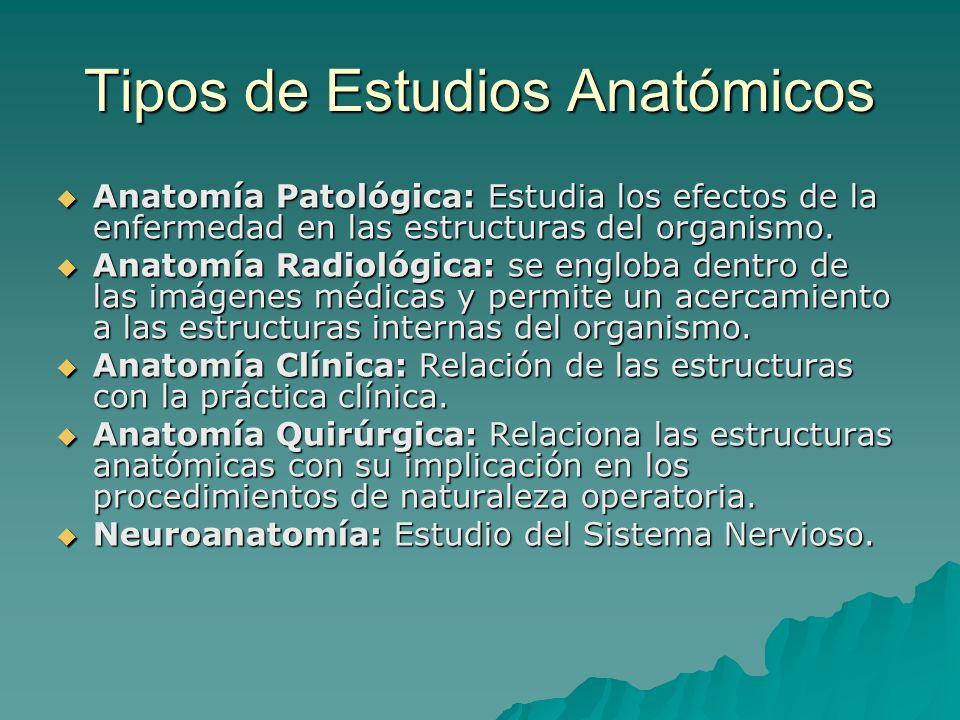 Tipos de Estudios Anatómicos
