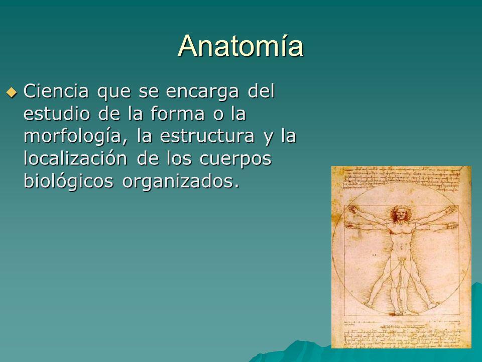 AnatomíaCiencia que se encarga del estudio de la forma o la morfología, la estructura y la localización de los cuerpos biológicos organizados.