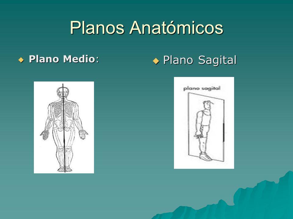 Planos Anatómicos Plano Medio: Plano Sagital