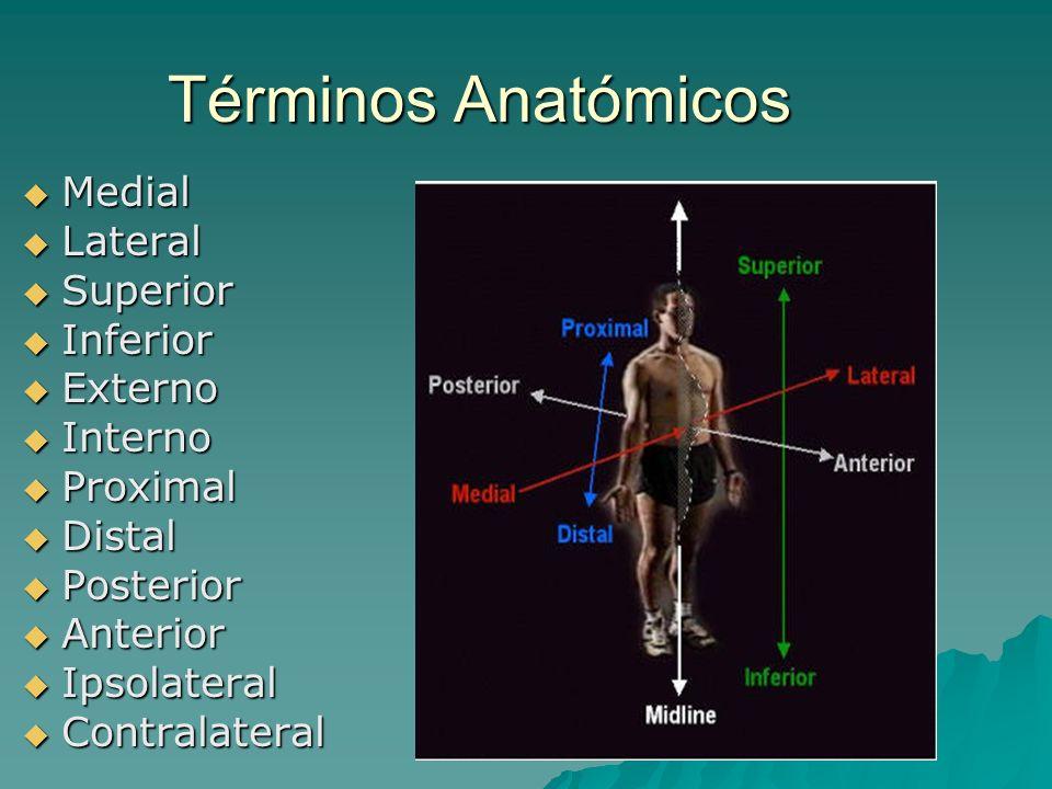 Términos Anatómicos Medial Lateral Superior Inferior Externo Interno