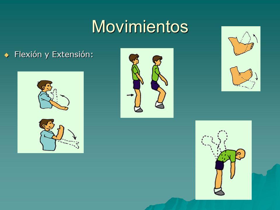 Movimientos Flexión y Extensión: