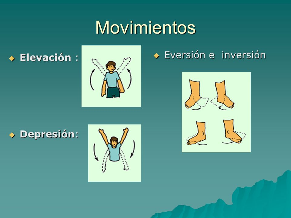Movimientos Elevación : Depresión: Eversión e inversión