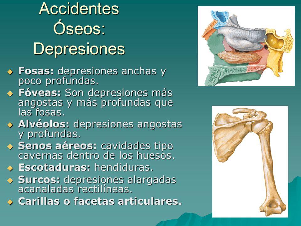 Accidentes Óseos: Depresiones