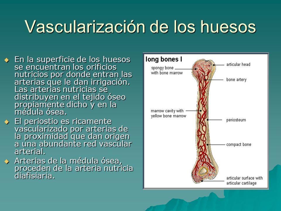 Vascularización de los huesos